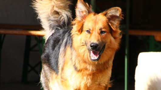 Ins Tierheim kam Amadeus, weil sich die Lebensumstände seines Vorbesitzers grundlegend verändert haben.