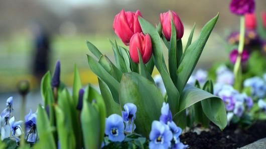 Im Frühjahr soll es in Fallersleben bunt werden.
