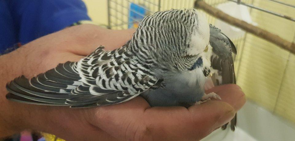 Wem gehört dieser Vogel?