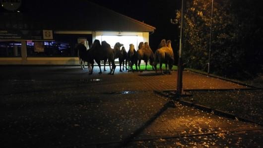Verkehrsteilnehmer hatten die Tiere vor dem Supermarkt in Bergen entdeckt.