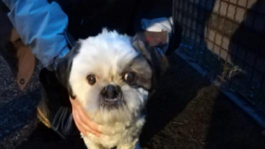 Der Hund wurde am Dienstagmorgen gefunden.