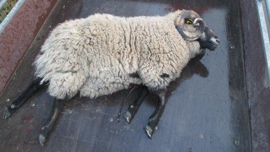 Das Tier wurde bei dem Unfall getötet.