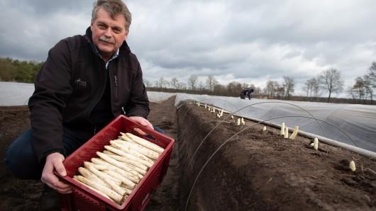 Lichtenhorst: Spargelbauer Carsten Bolte zeigt auf einem Feld im Landkreis Nienburg/Weser den ersten Spargel der Saison. Mit einer Holzhackschnitzelheizung und warmen Wasser erwärmt der Landwirt einen Teil seiner Spargelfelder von unten und kann so bereits deutlich vor anderen Landwirten Spargel ernten.