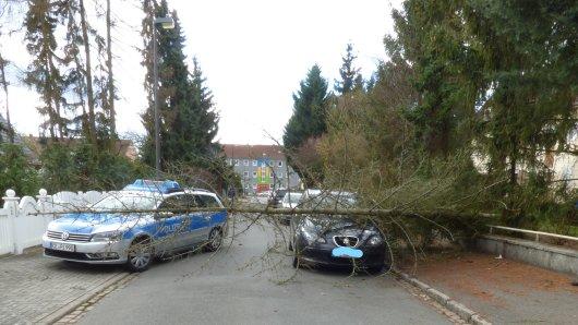 Der Baum hatte den Wagen am Donnerstag unter sich begraben.