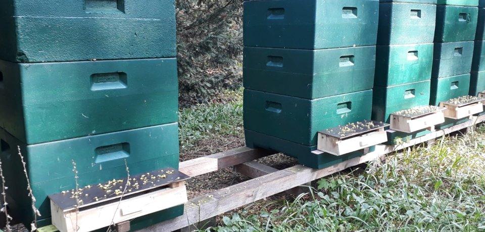 Ein Bienenvolk fehlt in Braunschweig.