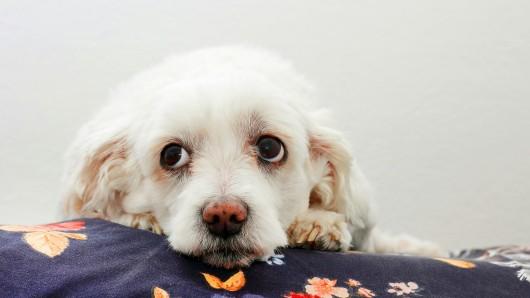Hund: Die Besitzerin konnte sich nicht mehr einkriegen. (Symbolbild)