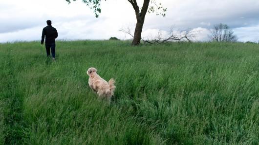 Hund: Der Mann ging mit seinem Vierbeiner spazieren, dann herrschte plötzlich eine große Gefahr. (Symbolbild)