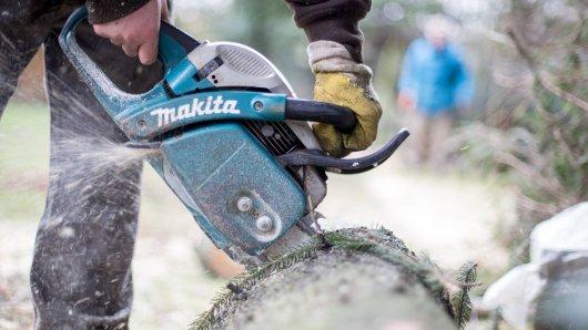 In München sollen rund 150 Bäume gefällt werden. Die Anträge dafür stellte der Mann einer Grünen-Politikerin. (Symbolbild)