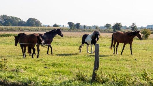 Im Kreis Helmstedt ist offenbar ein Pferderipper unterwegs. Die Besitzer bangen – und die Polizei ermittelt...