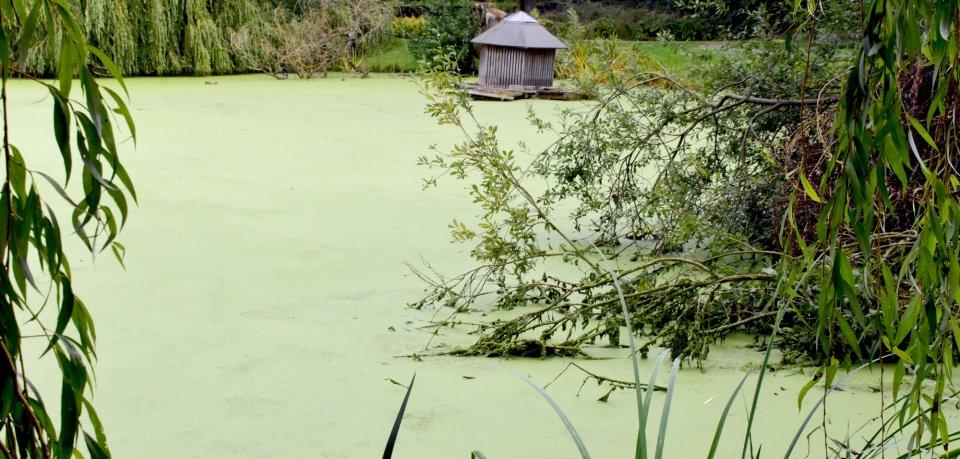 Vom Wasser unter dem Grünzeug ist nichts mehr zu sehen.