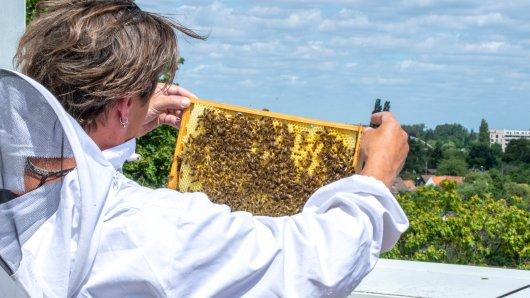 Die Stationierung der Bienen ist zunächst bis Ende August vorgesehen - zukünftige Einsätze nicht ausgeschlossen.