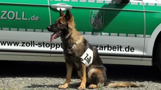 Hund Kelly hat am Freitag den richtigen Riecher bewiesen und einen erstaunlichen Fund an der A2 erschnüffelt.