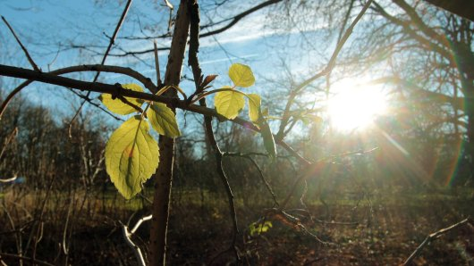 Das Wetter in Niedersachsen beschert der Region einen besonders milden Januar. Ein Meteorologe äußert jetzt einen schlimmen Verdacht. Symbolbild)