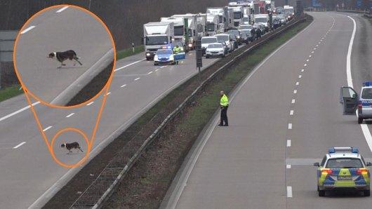 Der Hund musste auf der A29 in Niedersachsen erschossen werden.