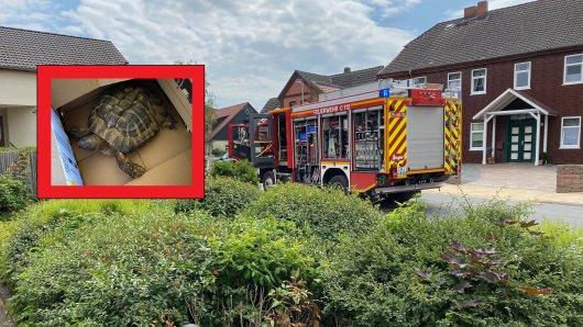 Die Feuerwehr hat eine Schildkröte aus einer brennenden Wohnung in Ilten bei Hannover gerettet.