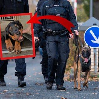 Magnus wollte Polizeihund werden. Doch daraus wird wohl leider nichts...