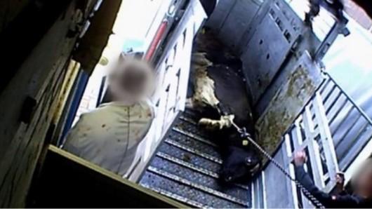 Niedersachsen: Mit heimlichen Videoaufnahmen hatten Tierschützer 2018 die Missstände in dem Schlachtbetrieb aufgedeckt. Jetzt gab es ein weiteres Urteil...