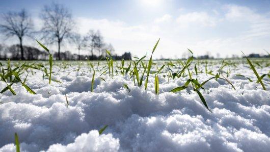 Das Wetter in Niedersachsen wird frühlingshaft – und bringt den Schnee zum Schmelzen. (Symbolfoto)
