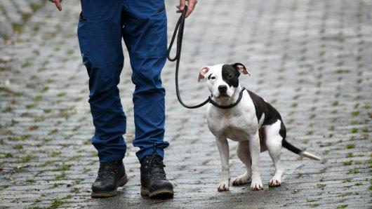 Hundebesitzer könnten in Hannover bald tiefer in die Tasche greifen! Vor allem, wenn sie eine von diesen Rassen halten. (Symbolbild)