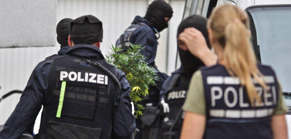 Nein, keine neue Bürodeko: In Schaumburg (Region Hannover) hat die Polizei eine Profi-Cannabis-Plantage entdeckt. (Symbolbild)