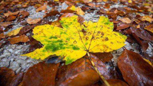 Der erste Herbststurm ist im Anmarsch. Auch in Niedersachsen. (Symbolbild)