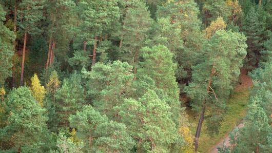 ARCHIV - 12.10.2017, Sachsen-Anhalt, Blankenburg:Wanderer gehen unterhalb der Burgruine Regenstein durch einen Wald zu den Sandhöhlen im Heers. (zu dpa «Natura 2000 - private Waldbesitzer sehen sich ausgebremst» vom 20.04.2018) Foto: Klaus-Dietmar Gabbert/dpa-Zentralbild/dpa +++ dpa-Bildfunk +++