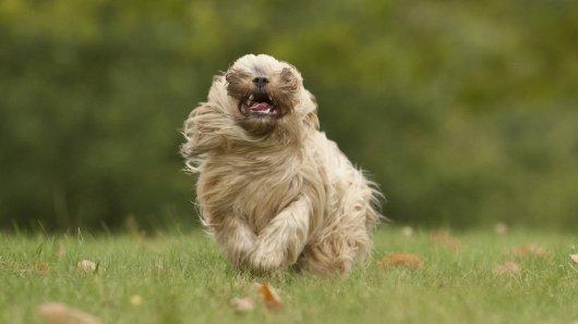 Ein Hund hat ein Kind in Lengede gebissen. (Symbolbild)