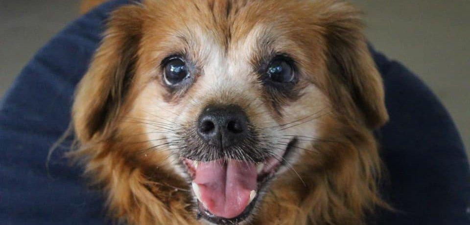 Der kleine Hund Kicki aus dem Tierheim Peine braucht Hilfe.