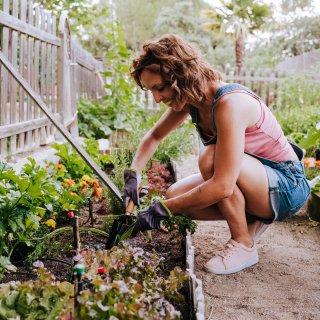 Der Landkreis Peine und die Gemeinde Iselde schauen nun genauer hin! Wenn du DAS in deinem Garten hast, kann es sein, dass du es schon bald ändern musst. (Symbolbild)