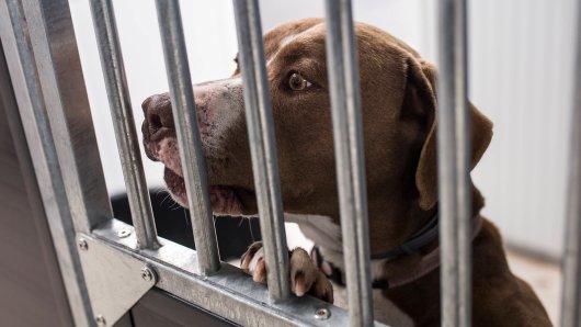 Hund in Peine: Das Schicksal hat es mit Hund Fero bislang nicht wirklich gut gemeint. (Symbolbild)