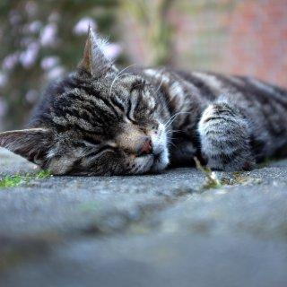 In Peine hat ein Tierquäler auf Katzen geschossen. Eine ist gestorben. (Symbolbild)