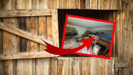 Schockierende Entdeckung in einem Stall in Peine!