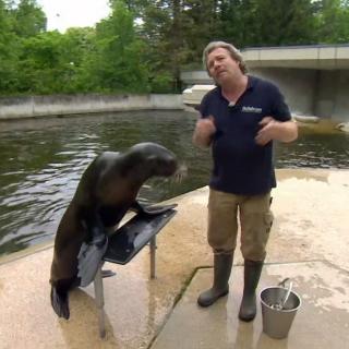 München Tierpark: Pfleger Helmut gibt ein Interview. Immer an seiner Seite ist Seelöwendame Molly.