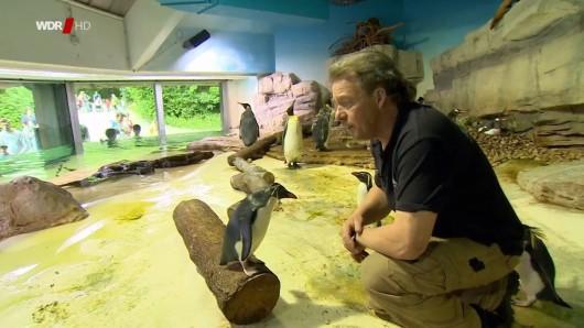Im Zoo in München gibt es einen Pinguin, der partout nicht ins Wasser will.