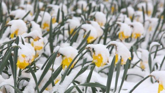 Von wegen Frühling! Das Wetter in NRW kommt einfach nicht zur Ruhe! (Symbolbild)