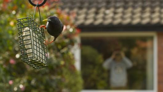 Ich bin ein Star! Fernglas raus und Vögel zählen - das ist doch mal eine Wochenend-Beschäftigung. (Symbolbild)