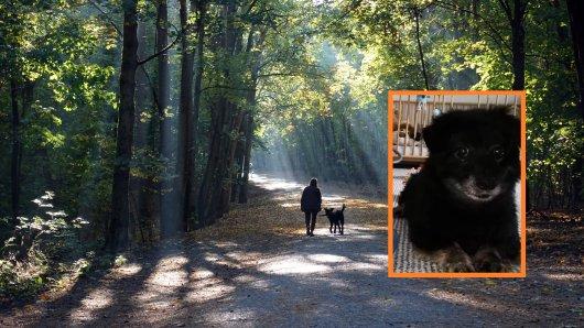 Eine Familie aus Eilsleben sucht einen Gassi-Geher für Hund Pikus. Dahinter steckt eine traurige Geschichte.