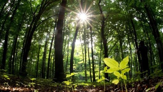 Ohne Bäume wären wir nichts.
