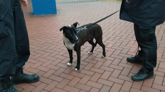 Nach drei Stunden wurde der Hund in Salzgitter eingefangen – aber wem gehört er?