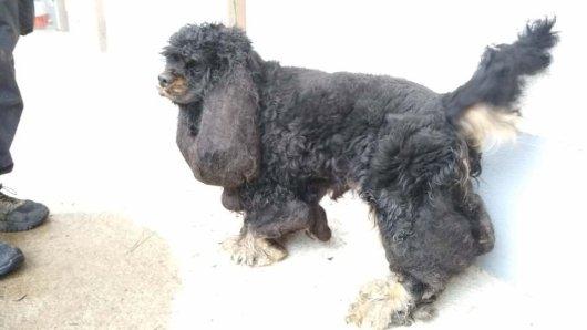 """So wurde Hund """"Cody"""" an der A39 in Salzgitter gefunden. Inzwischen sieht er ganz anders aus - dem Tierheim sei Dank!"""