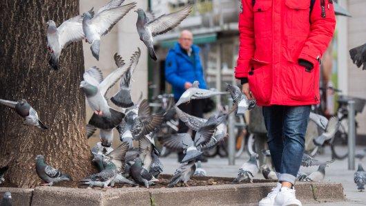 Das Thema Tauben sorgt immer wieder für Diskussionen. Tierschützerin Inga Gröschl  wurde in anderthalb Jahren Taubenpflege mehr beleidigt als in ihrem kompletten restlichen Leben (Symbolbild).