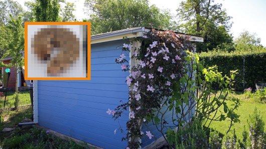 In Salzgitter hat eine Frau ein merkwürdig aussehendes Insekt in einem Garten gefunden. (Symbolbild)