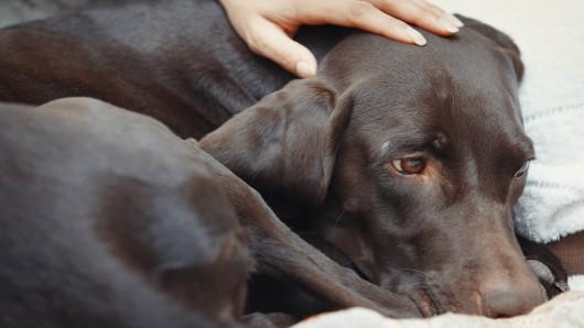 Tierretter haben in Thüringen einen ausgesetzten Hund gefunden. (Symbolbild)
