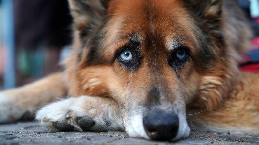 Was einem Hund von ebay widerfahren ist, macht traurig und wütend. (Symbolbild)