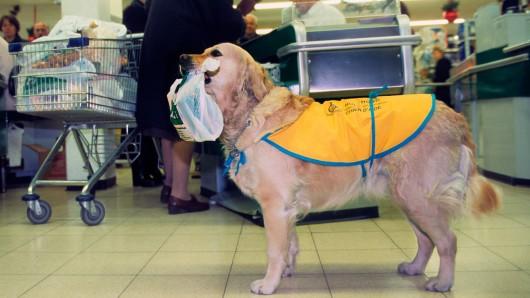 Ein Hund war in einem Supermarkt auf einer ganz besonderen Mission. (Symbolfoto)