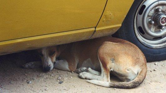 Hund: Aus einem einfachen Grund kann dieser verletzte Vierbeiner nicht auf fremde Hilfe hoffen. (Symbolbild)