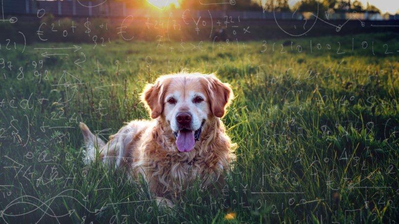 Hund: Neue Formel! SO alt ist dein Hund wirklich in Menschenjahren