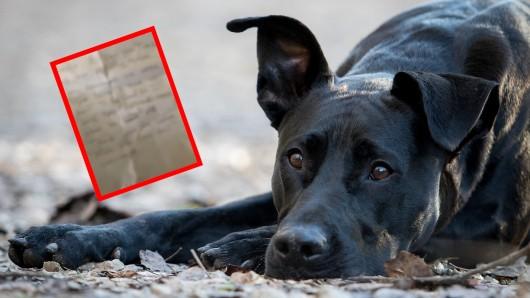 Ein Labrador-Hund wurde mit einem fiesen Zettel einfach ausgesetzt. Doch man fand den Besitzer. (Symbolbild)