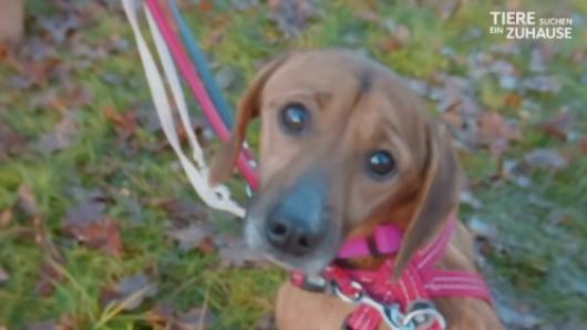 In der Sendung Tiere suchen ein Zuhause wurde auch Hund Takka vorgestellt.