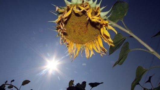 Ein Hitzesommer würde der Natur in Deutschland wie schon in den vergangenen Sommern ziemlich zusetzen. (Symbolfoto)
